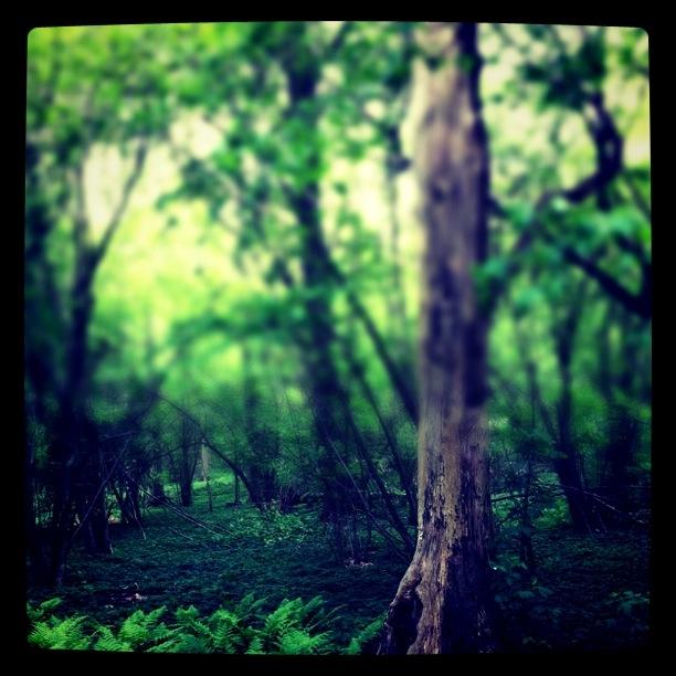Fina gamla träd