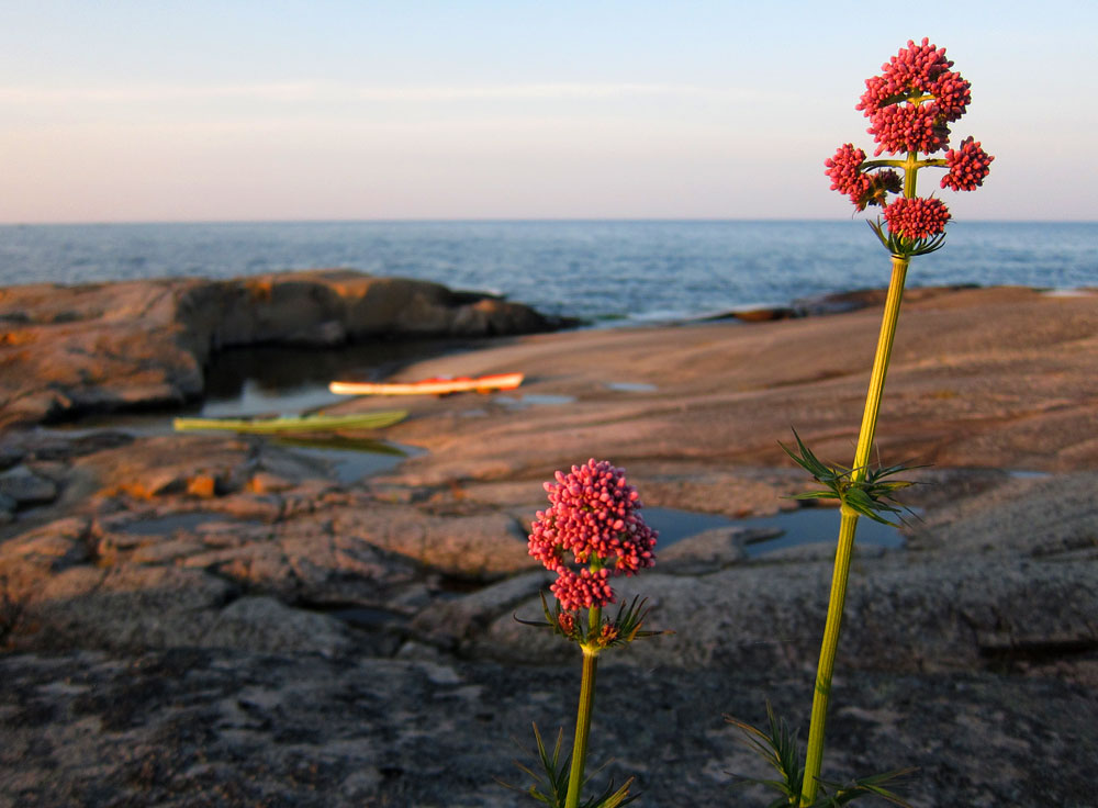 Blommor, horisont & kajaker