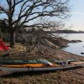 Tältplats under eken vid stranden på Snuggö