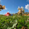 Blomstrar på Slubbersholmen