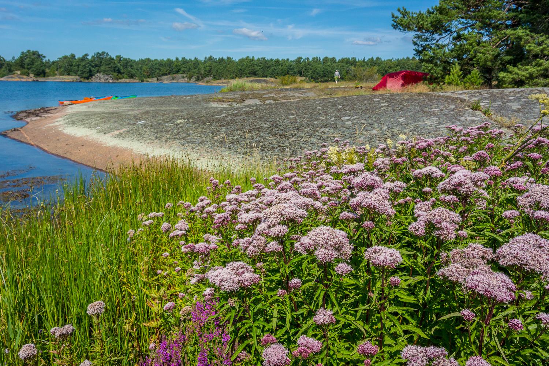 Finfin ö med gott om blommor och dessutom lite hjortron