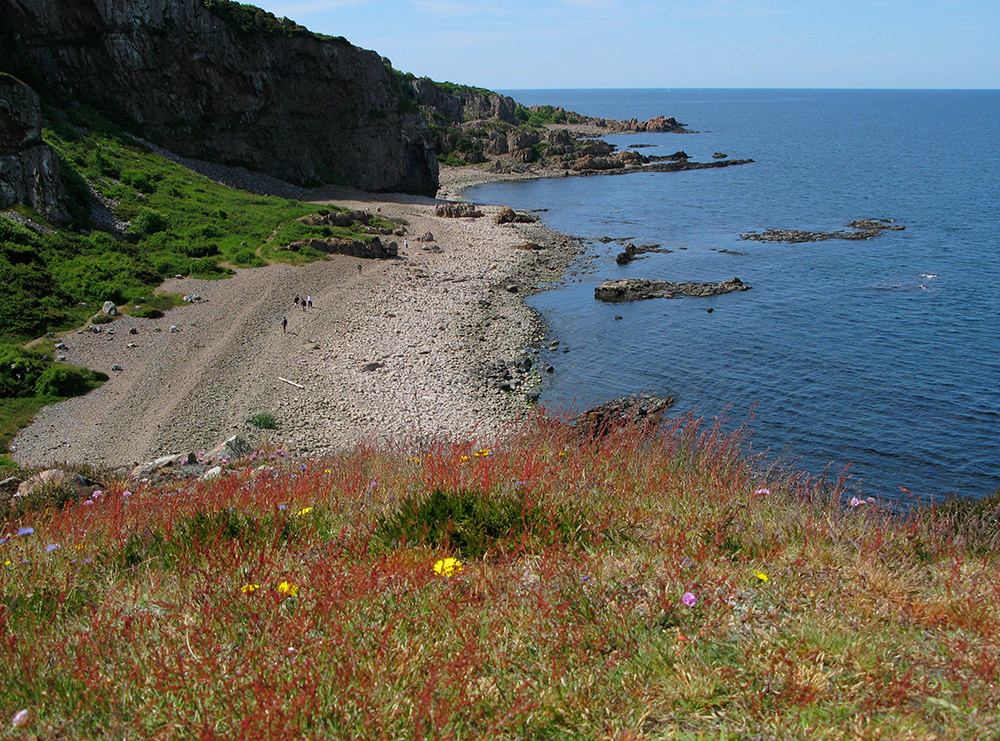Stenfält och lite blomster. Vy ut mot havet