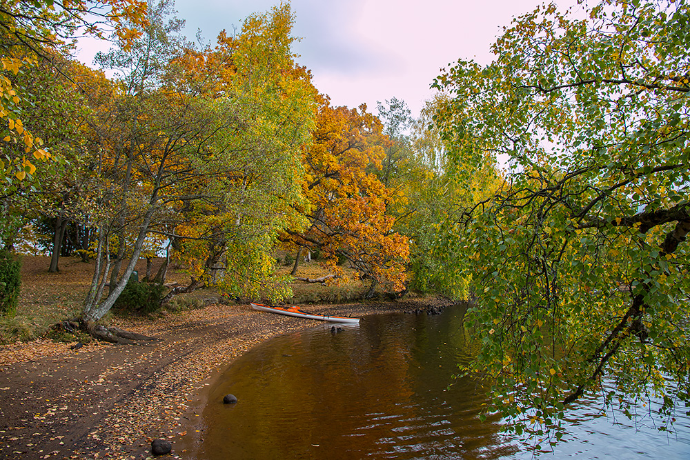 Finfin paus och/eller lägerö. Ofta mycket fina höstfärger både kring Hjörneredssjön och Lagan